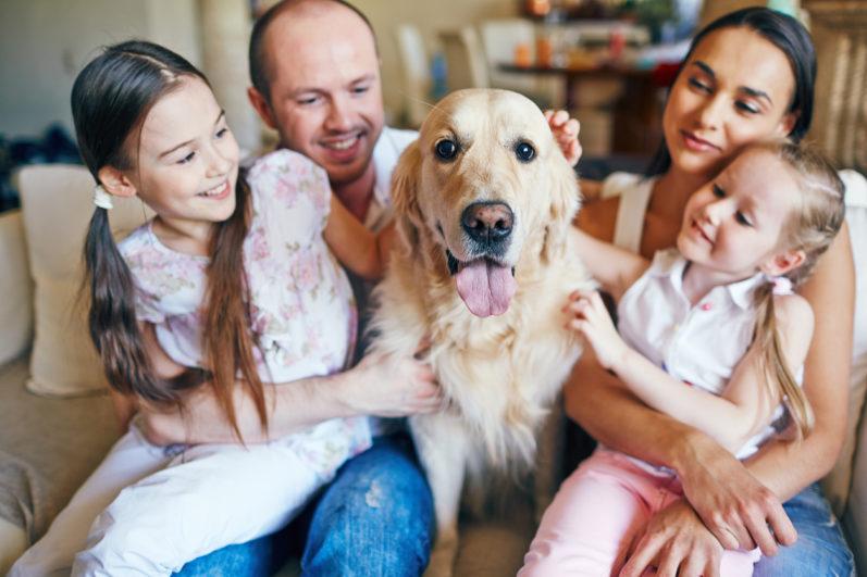 Animais em apartamento: como preparar um ambiente confortável para o pet